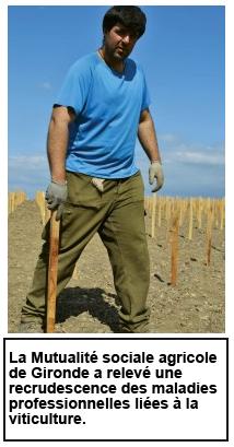 Ouvrier viticole